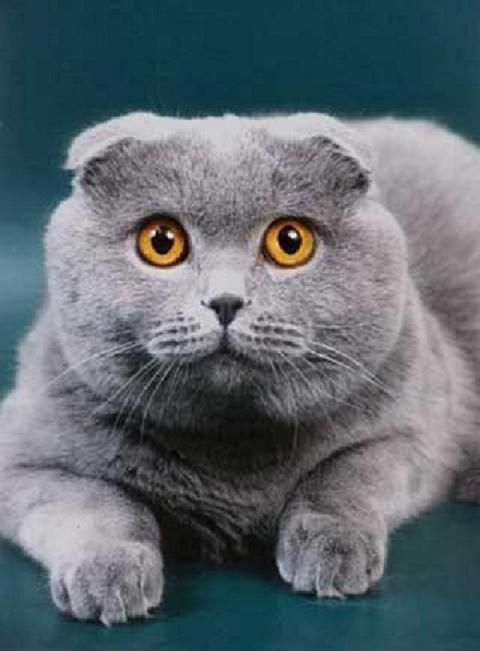 Чем кормить котенка и как это правильно делать | Кормление ...